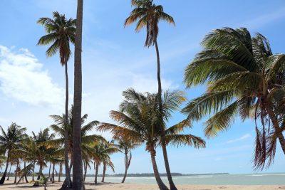 Bahia Beach Rio Grande, PR Beaches Puerto Rico